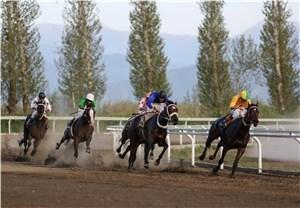 بررسی وضعیت فدراسیون اسب سواری
