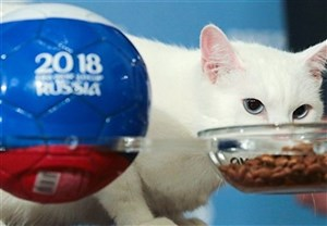 برد ایران در برابر مراکش ; پیشگویی جدید آشیل گربه معروف