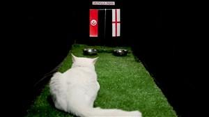 پیش بینی بلوط گربه ورزش سه از بازی انگلیس - تونس