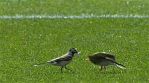 شکار لحظه ها در بین دو نیمه بازی بلژیک - تونس