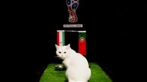 پیش بینی بلوط گربه ورزش سه از بازی ایران-پرتغال