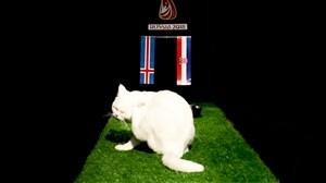 پیش بینی بلوط گربه ورزش سه از بازی ایسلند-کرواسی