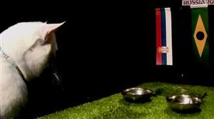 پیشبینی بلوط گربه ورزشسه از بازی صربستان-برزیل