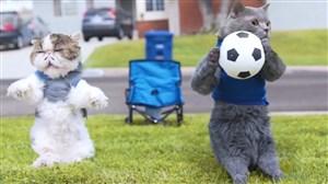 کلکل گربه های فوتبالیست