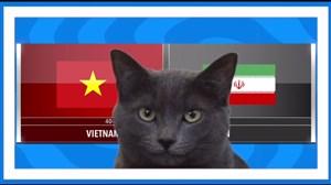 پیش بینی گربهی پیشگو جام ملتها از بازی ایران و ویتنام