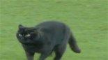 ورود گربه به زمین بازی اورتون - ولورهمپتون