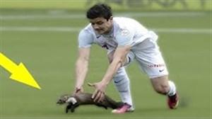 جالب ترین لحظات ورود حیوانات به زمین فوتبال
