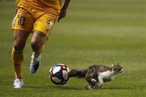 ورود گربه به زمین در جام حذفی آمریکا