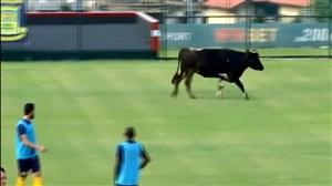 ورود حیوانات به زمین فوتبال