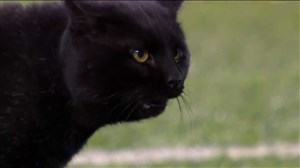 ورود گربه دردسر ساز به زمین فوتبال آمریکایی